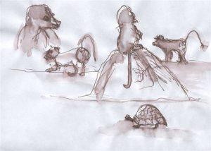 Südafrika Schildkröte,Affen